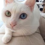 柴咲コウが熊本で出会った猫の名前は?身長サバ読み疑惑の真相