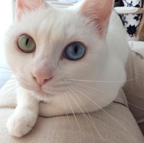 柴咲コウが熊本で出会った猫の名前は?